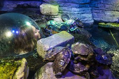 2-4-1 Entry For Couples On Valentine's Day at Sea Life Brighton