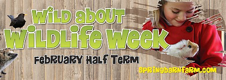 Wild about Wildlife Week at Spring Barn Farm