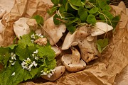 Foraging Courses at Tilgate Park