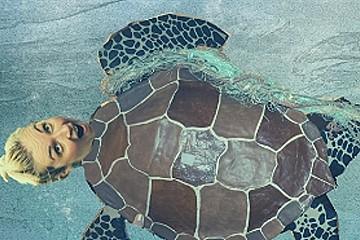 Turtles Don't Like Plastic